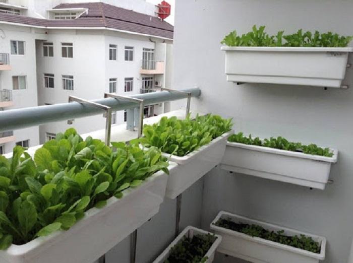 Thiết kế lắp đặt vườn rau sạch tại nhà