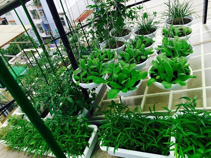 cách thiết kế vườn rau