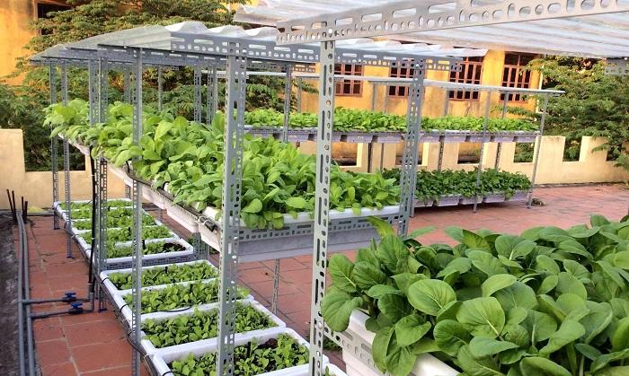 thiết kế vườn rau trong nhà chất lượng