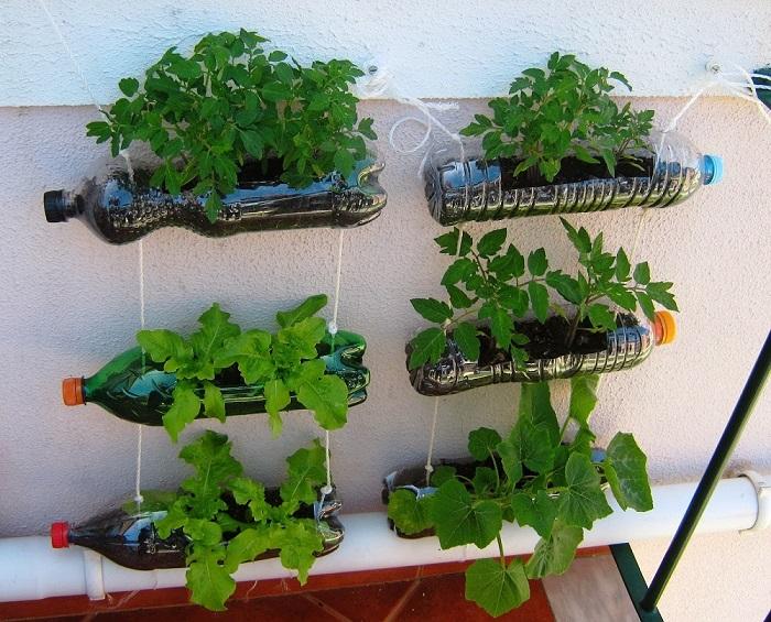 Thiết kế vườn rau sau nhà