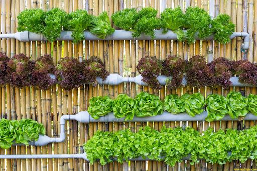 Tiết kiệm được thời gian trồng và chăm sóc cây