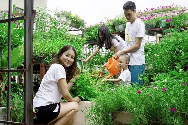 Chú ý chăm sóc cây thật kỹ khi trồng rau sạch bằng xỉ than