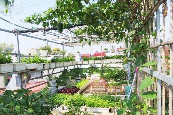 Trồng rau trên sân thượng- 30 phút có ngay vườn rau xanh