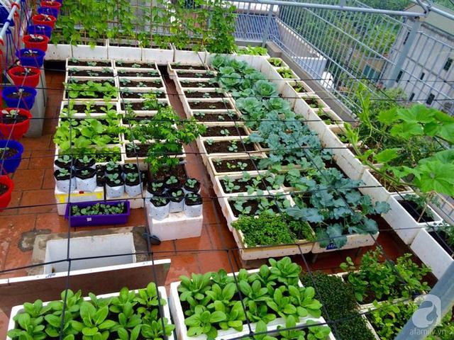 cách thiết kế vườn rau đẹp tại nhà