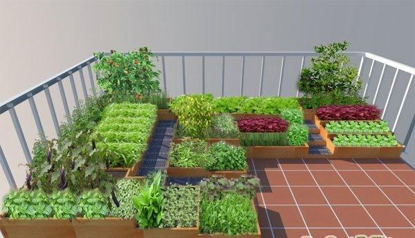 Cách làm đất trồng rau trên sân thuongj đơn giản tại nhà