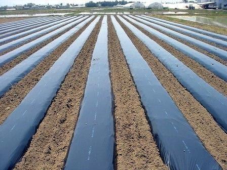 Phủ màng đất nông nghiệp tăng dinh dưỡng và chất lượng đất gieo trồng