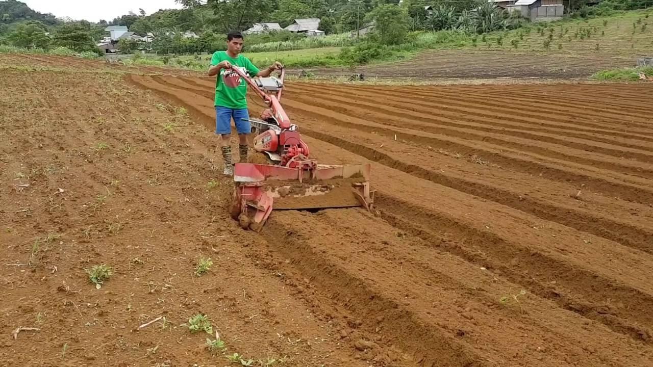 Lựa chọn khu đất gieo trồng thuận tiện, phù hợp