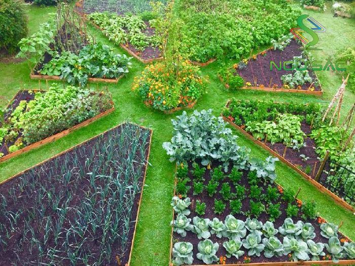 thiết kế vườn rau rau đẹp tại nhà