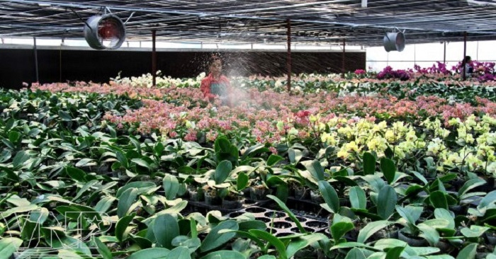 Xây dựng hệ thống tưới phun mưa cho lan