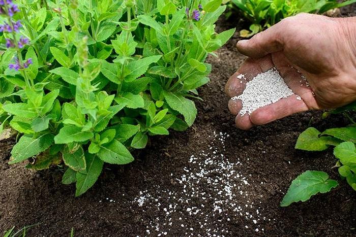 tư vấn cách bón phân cho rau