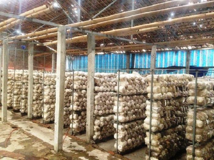 cách làm đất trồng nấm đơn giản