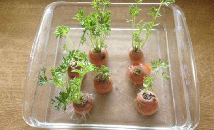 10 loại rau củ có thể tái sinh