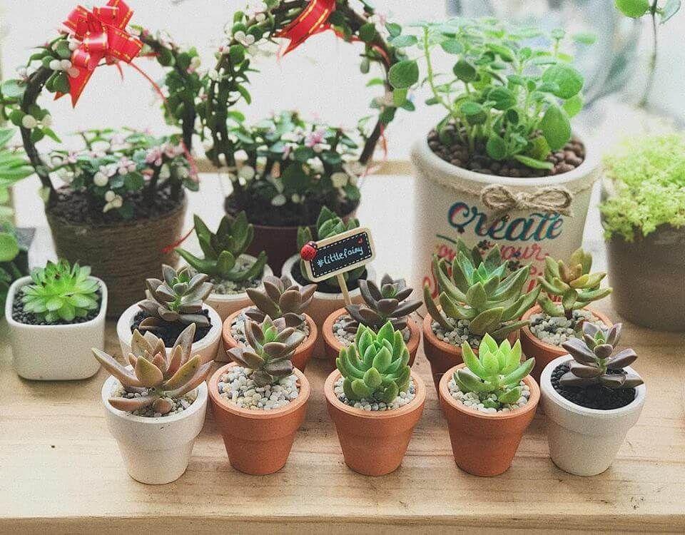 Chậu trồng cây bằng đất nung