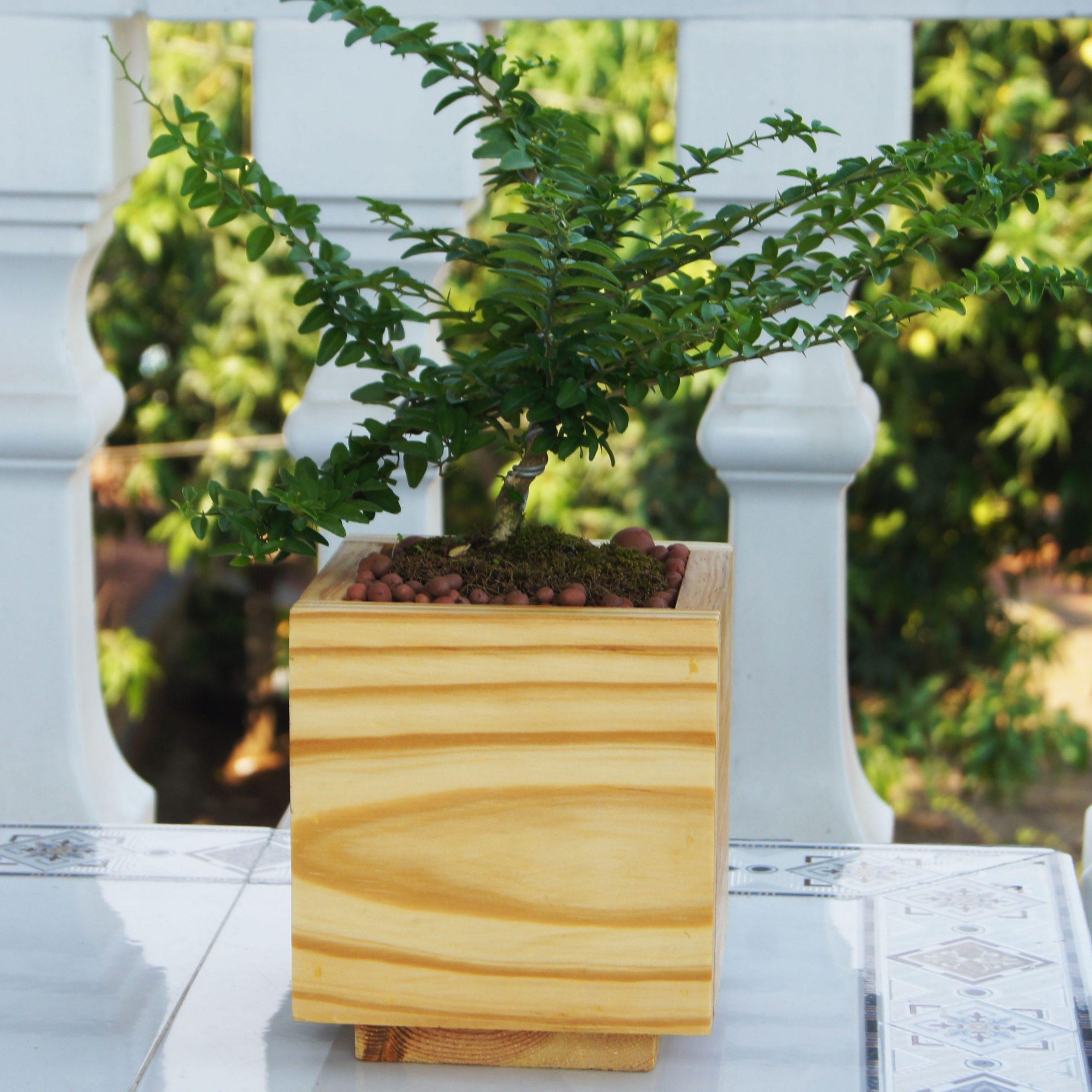 Chậu trồng cây bằng gỗ