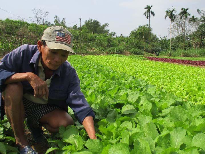 Chế phẩm sinh học bảo vệ câu trồng