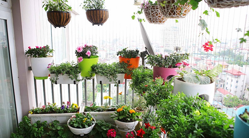 Chậu trồng hoa