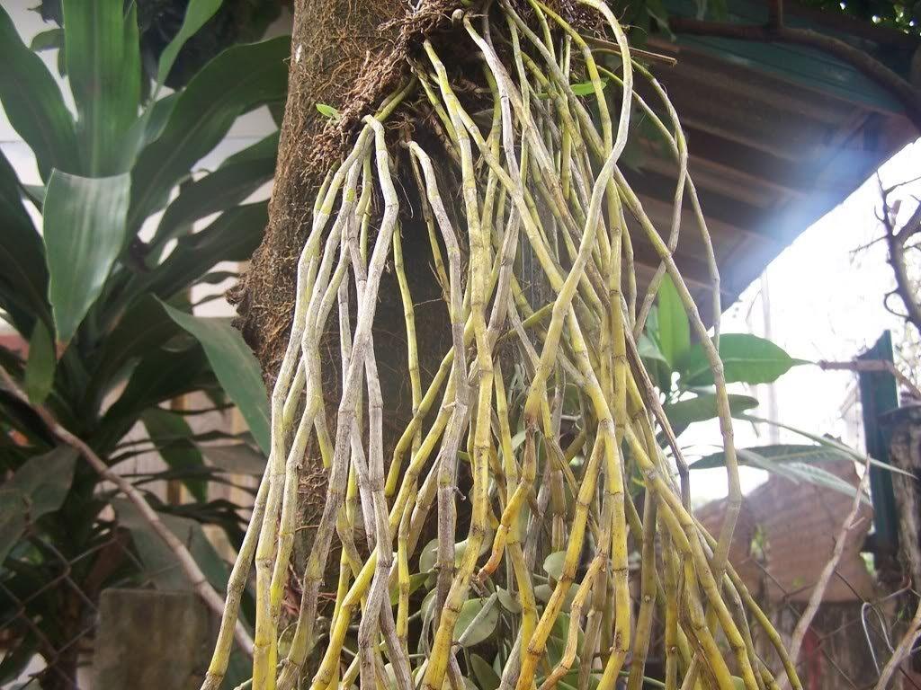 Dưỡng chất AB kích thích ra rễ