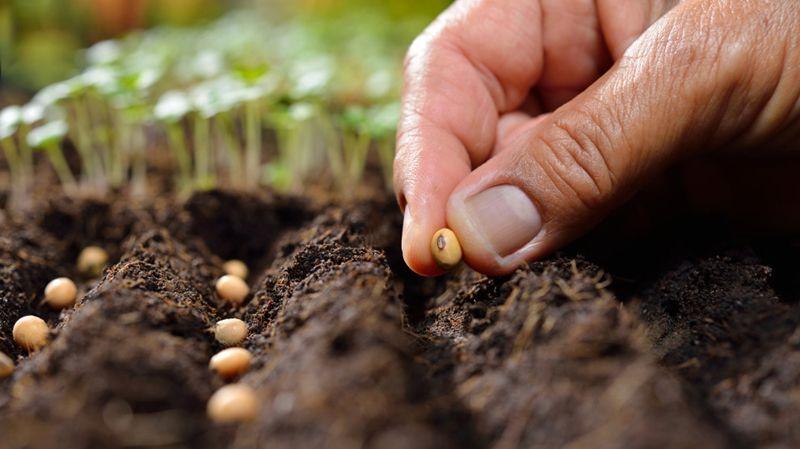 Hạt giống cây trồng