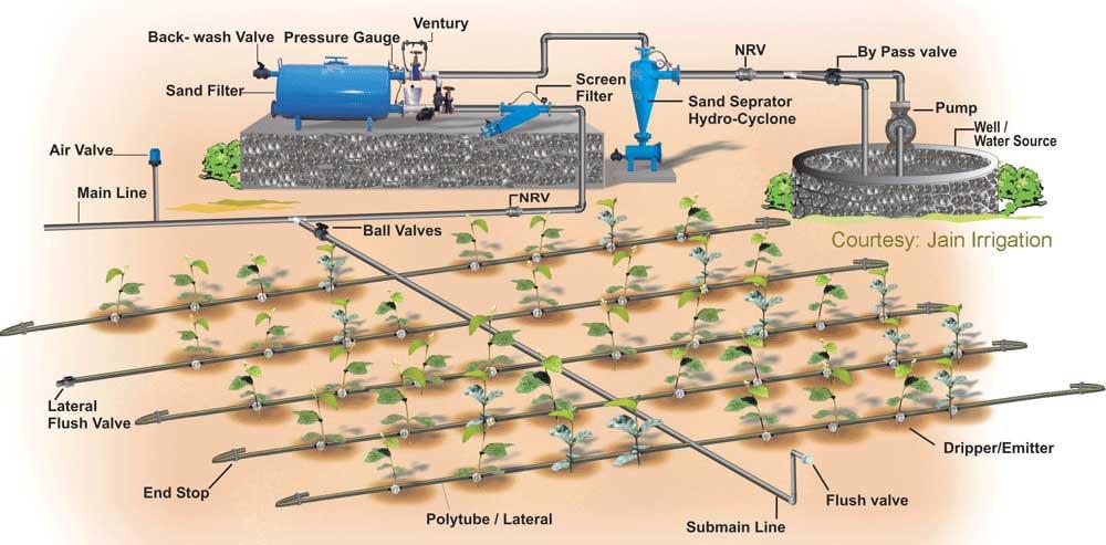 Hệ thống tưới nhỏ giọt ở Việt Nam
