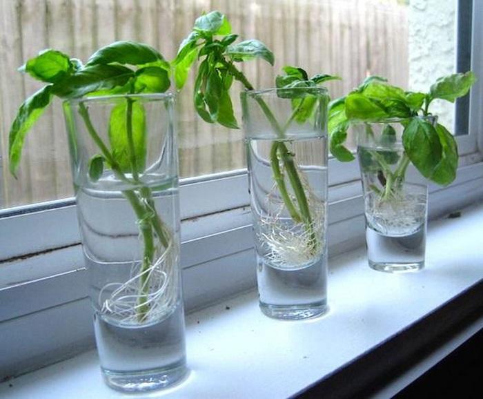 10 loại rau củ tái sử dụng trồng lại