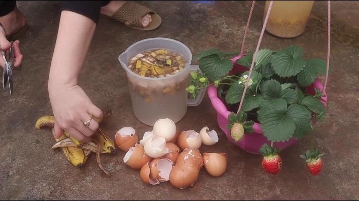 cách làm phân bón từ vỏ chuối đơn giản