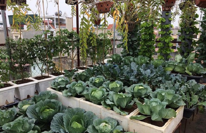 7 loại rau nên trồng vào mùa đông