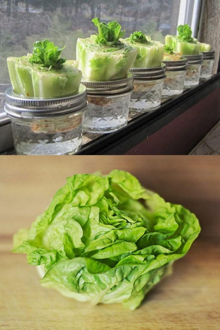 Tái sinh 10 loại rau củ trong nhà bếp