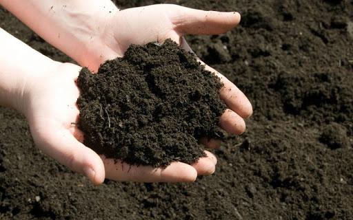 Phân hữu cơ cải tạo đất trồng cây tốt.