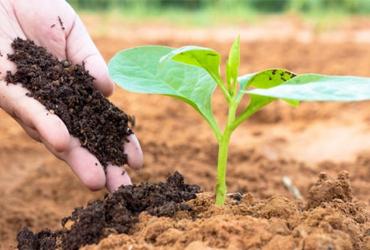 Bón phân giúp cây hấp thụ chất dinh dưỡng