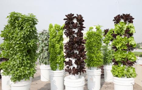 Cách trồng rau sạch không cần đất khí canh
