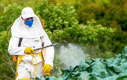 Mặc đồ bảo hộ khi phun thuốc trừ sâu
