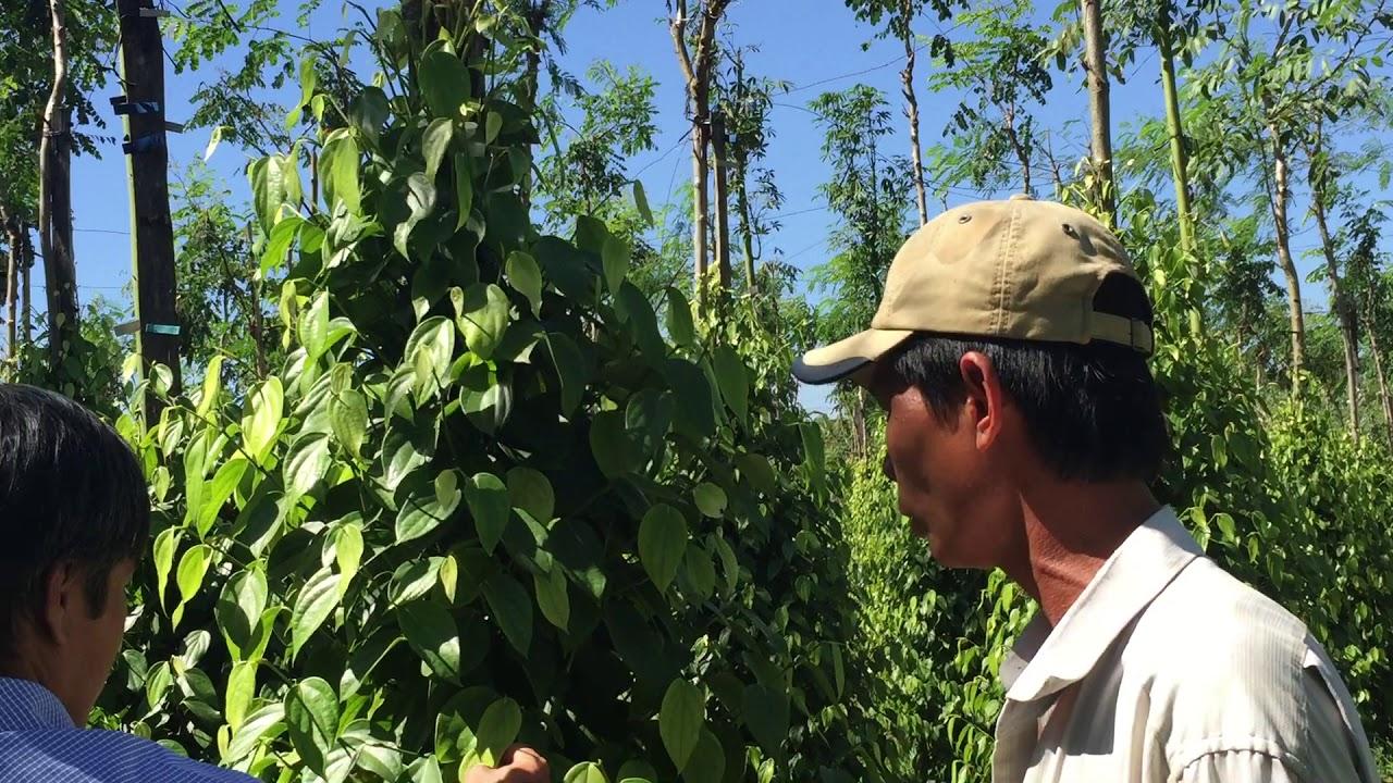 Phân bón hữu cơ Vigrow là loại phân bón cần thiết cho sự sinh trưởng và phát triển của cây