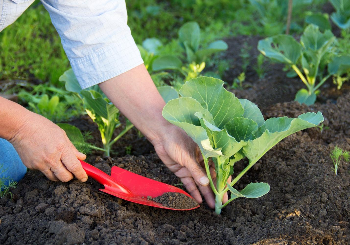 Phân hữu cơ Ferto của ramita Thái Lan có thể sử dụng được cho tất cả các loại cây trồng