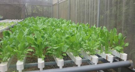 Phương pháp trồng thủy canh