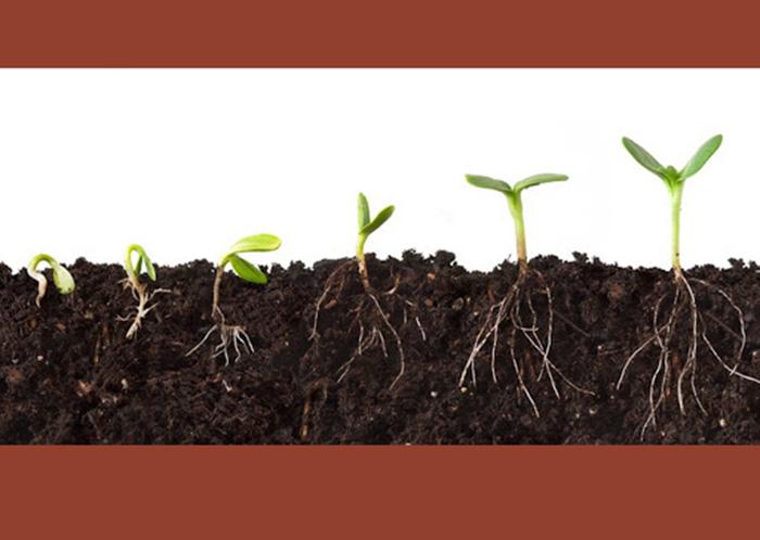 thuốc siêu kích thích ra rễ