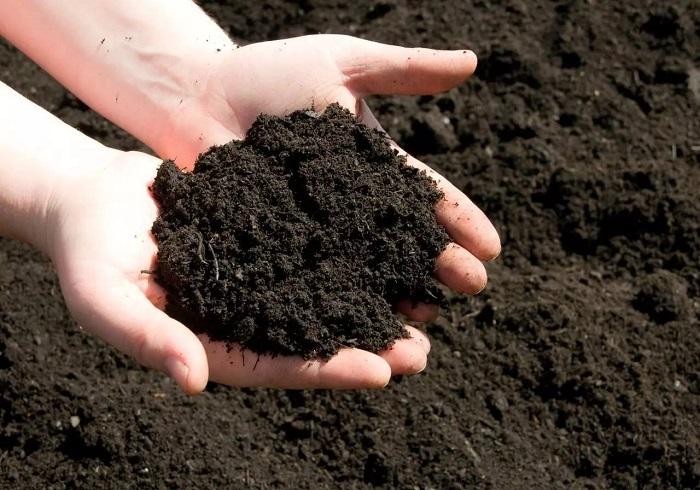 cách cải tạo đất sau thu hoạch
