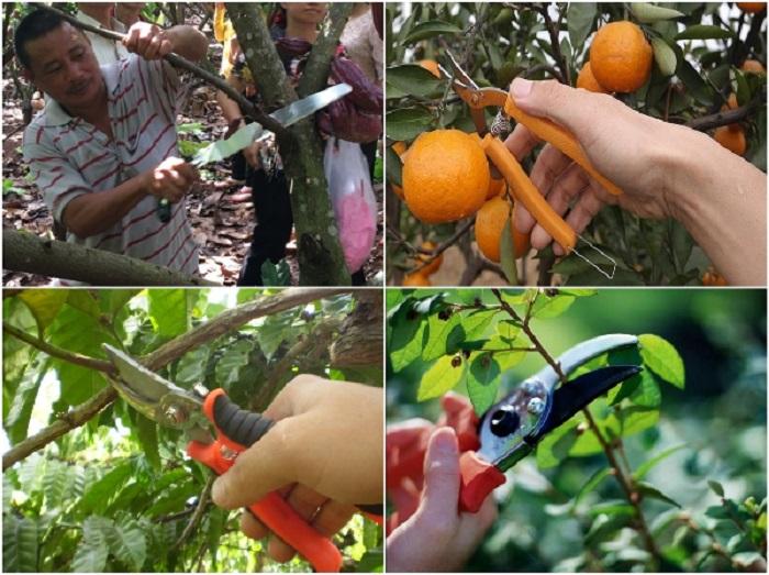 biện pháp khắc phục tình trạng cây ăn trái không cho quả