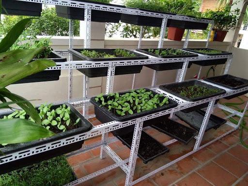 Giàn trồng rau sạch tại nhà