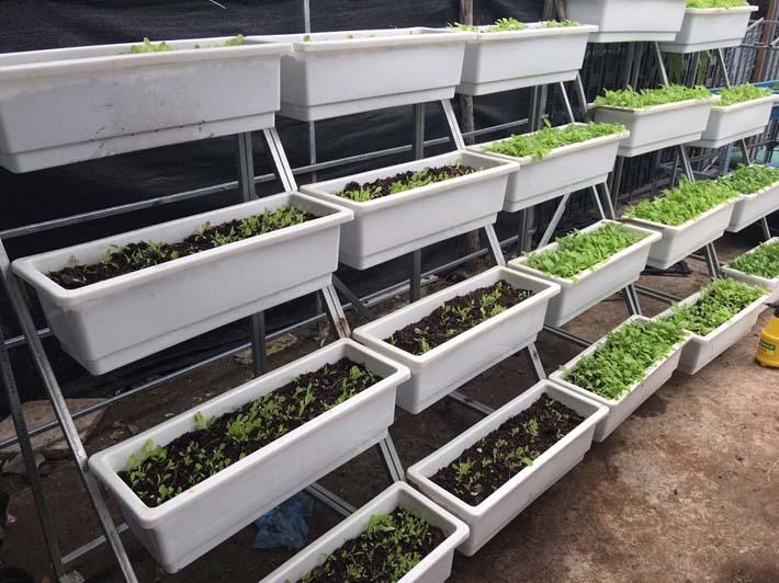 Làm giàn trồng rau sạch tại nhà hiệu quả