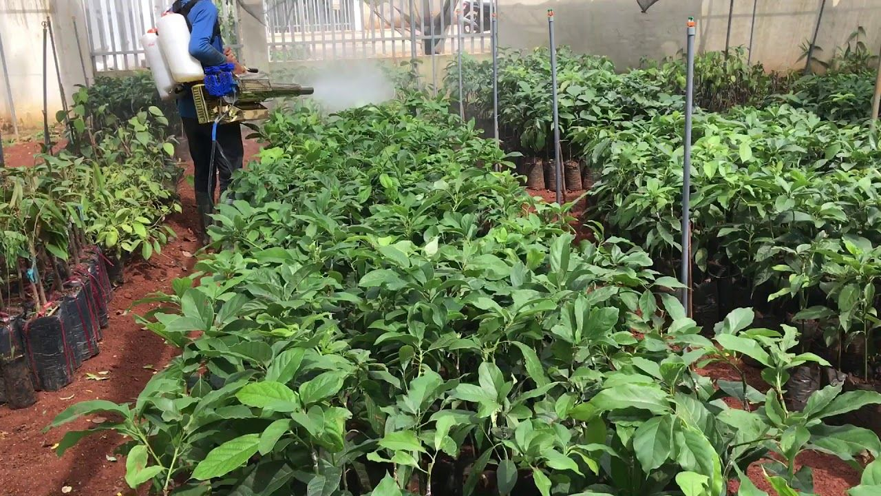 Phân bón Grow More giúp cây trồng sinh trưởng mạnh