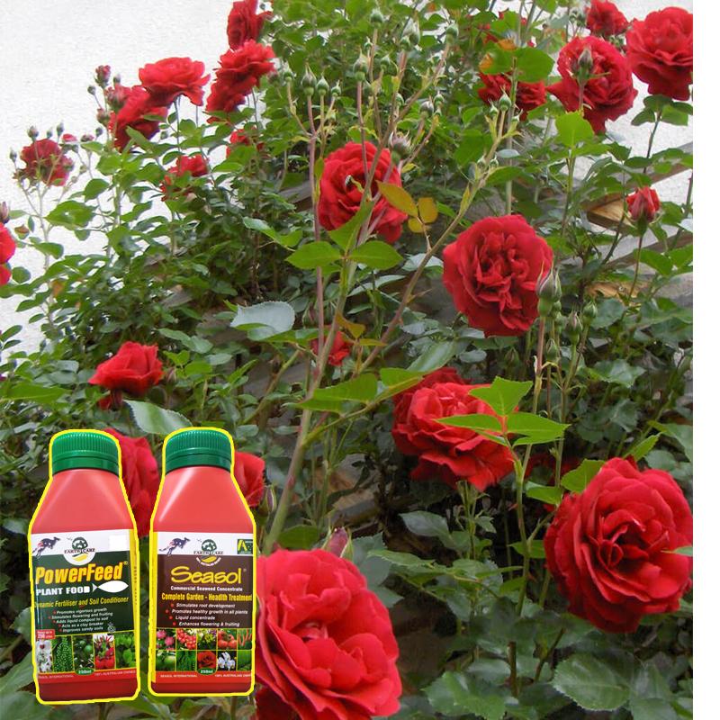 Phân bón lá Seasol nâng cao hiệu quả cây trồng đang được ưa chuộng nhất hiện nay