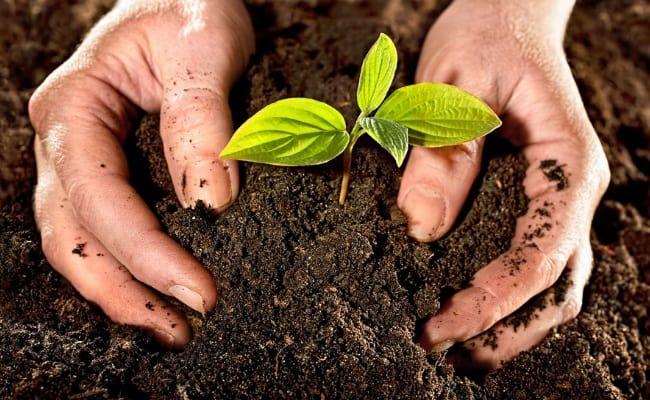 Cải tạo đất trồng mang lại lợi ích gì cho cây?