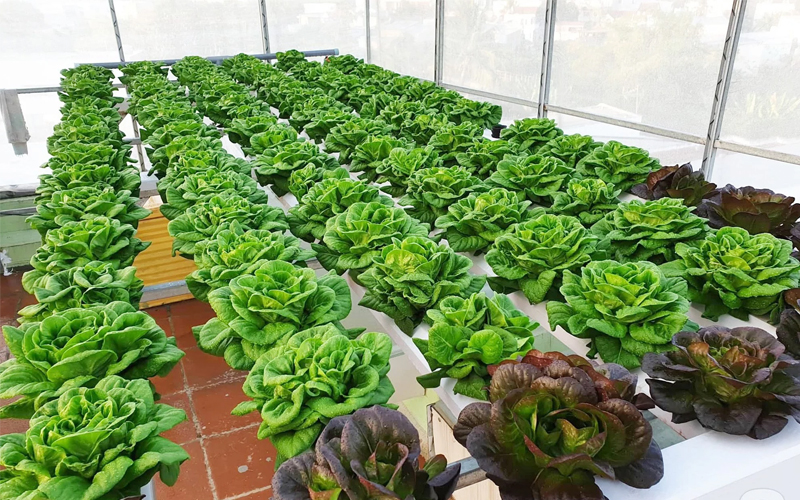 Đất trồng rau có thể tái sử dụng để trồng lứa rau mới