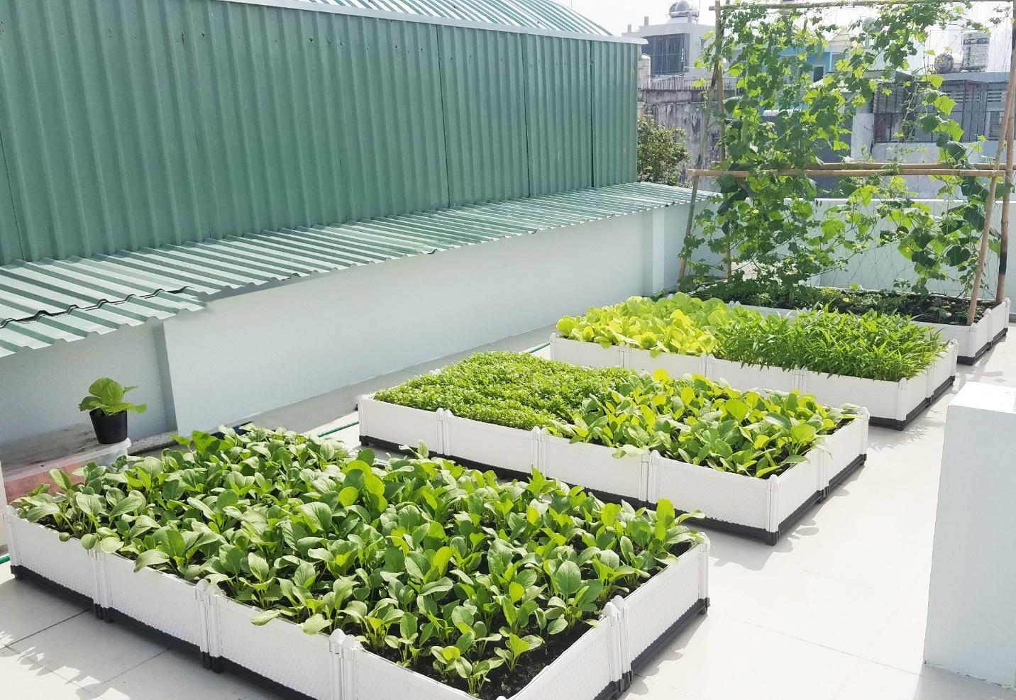 Chọn đất sạch và dinh dưỡng để trồng rau