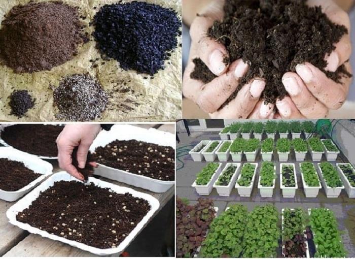 trồng rau thơn siêu đơn giản