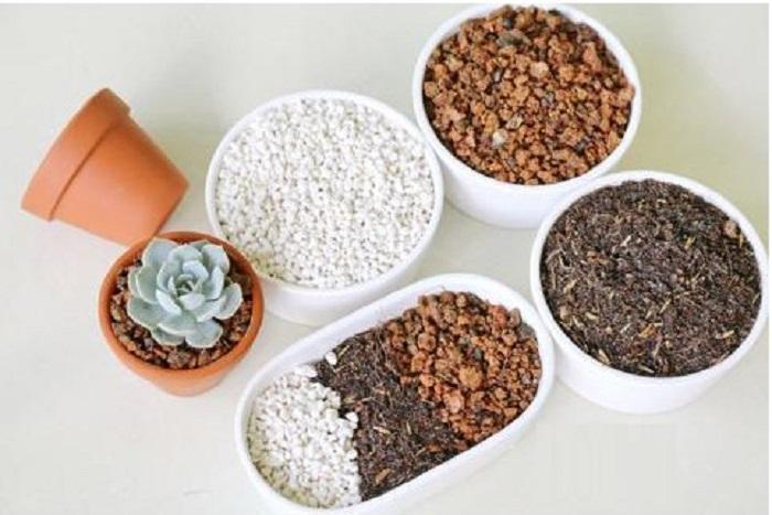 bí quyết trồng sen đá tại nhà