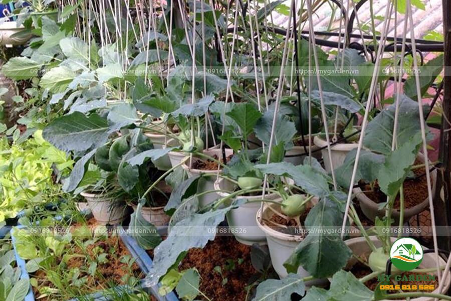 Phan-bon-Dau-trau-vi-sinh-HCMK7-goi-1kg-vien-duong-hoa-re-4