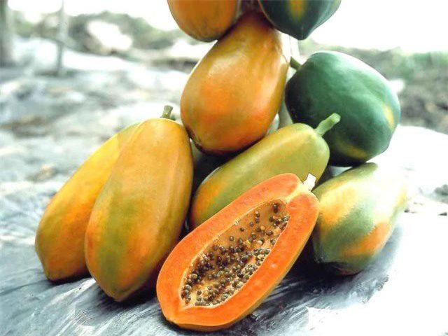 Đu đủ được xem là một trong những cây ăn quả chứa nhiều chất dinh dưỡng nhất