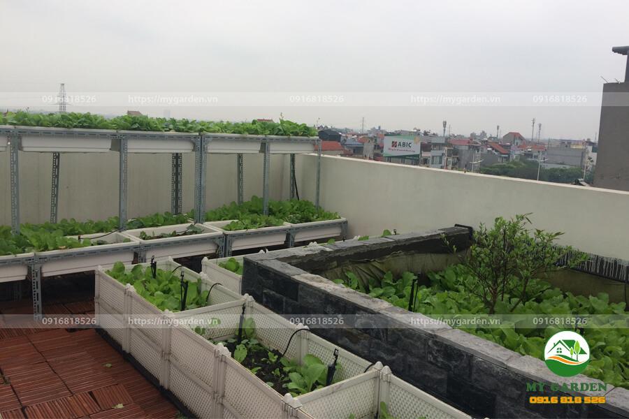 8.2. Vuon rau xanh sach dep nha chi Nhung Trinh Cong Son - Mygarden.vn - 0916818526