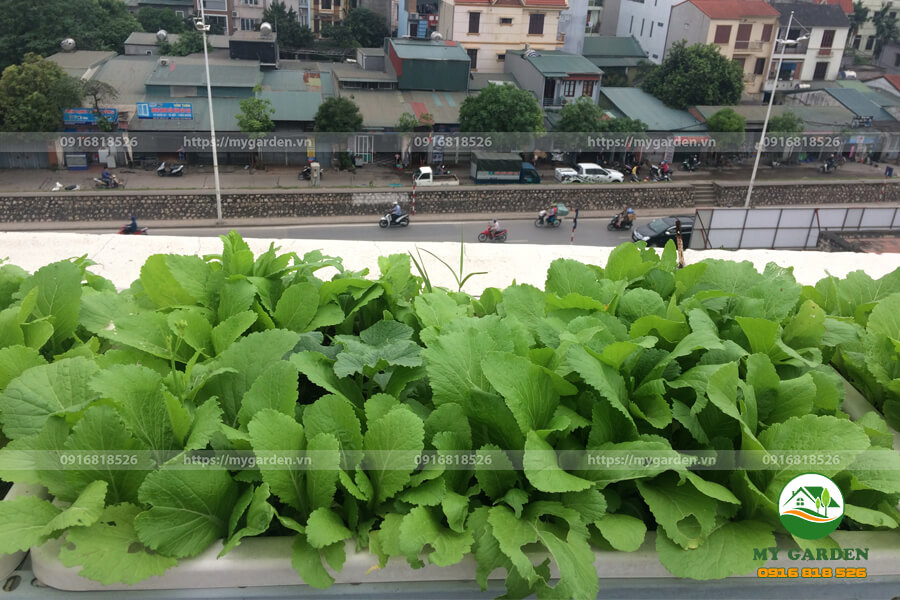 8.6. Vuon rau xanh sach dep nha chi Nhung Trinh Cong Son - Mygarden.vn - 0916818526